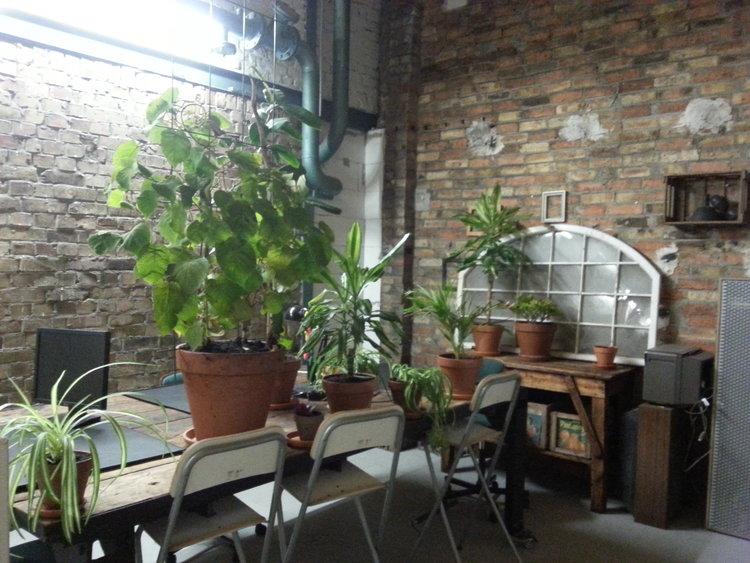 Karibuni Pflanzen